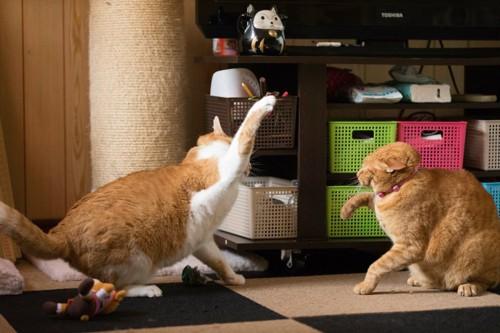 叩こうとする猫