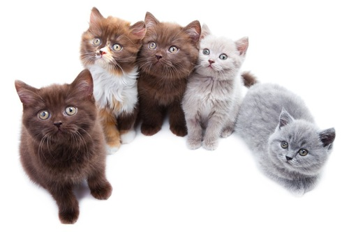 カラーが違う子猫達