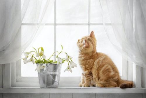 窓辺に座って外を見る子猫