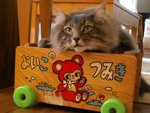 積み木の箱と猫