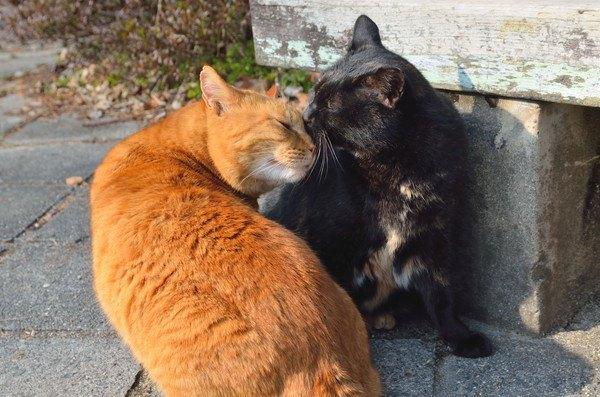 舐め合う猫