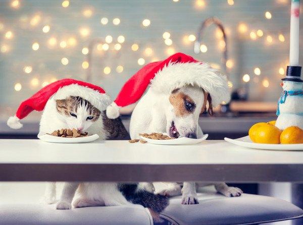 猫と犬のクリスマス