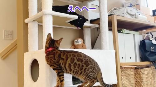 キャットタワーで寝転がる猫