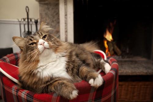チェック柄のベッドでくつろぐ猫