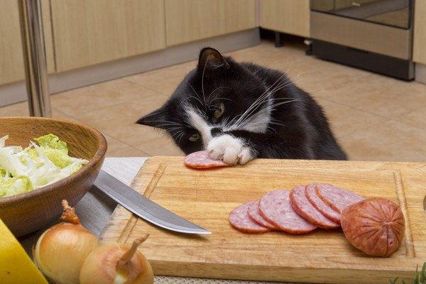前足を伸ばしてまな板の上のハムを取ろうとしている猫