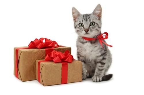 猫とプレゼントボックス