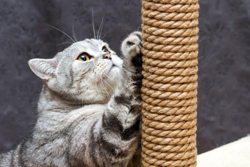 爪とぎポールで爪をとぐ猫