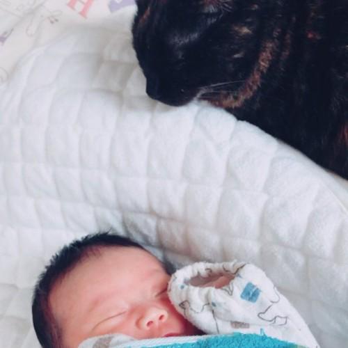 赤ちゃんとサビ猫