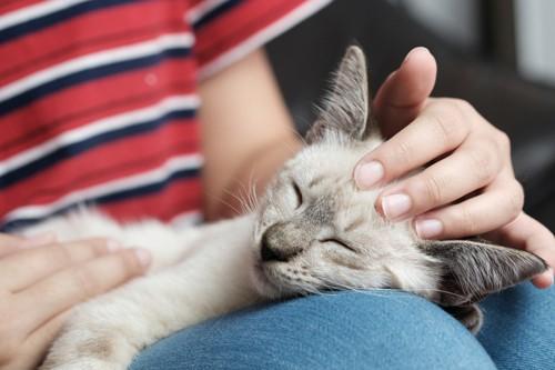膝の上で撫でてもらう猫