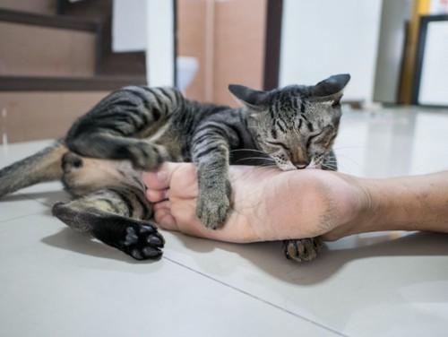 足にじゃれつくキジトラ猫