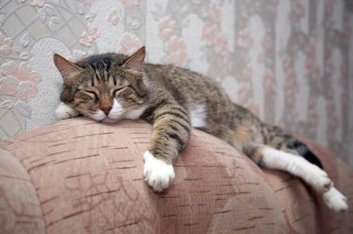 ソファーの背もたれの上で眠る猫