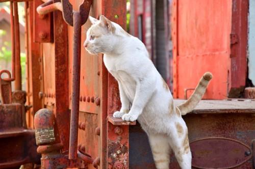 後ろ足で身を乗り出している猫