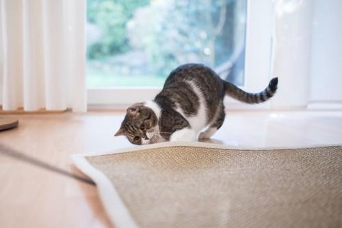 探し物をする猫