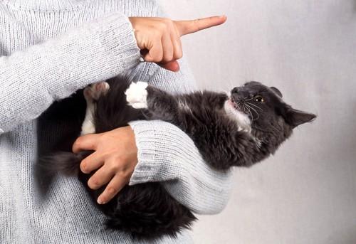反抗する猫