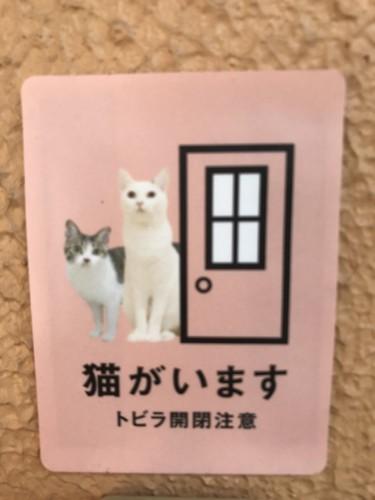 猫のステッカー写真