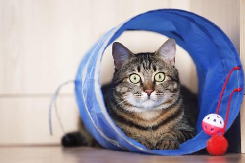 トンネルのおもちゃの中に入っている猫