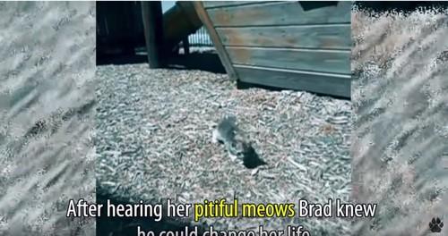 屋外に小さな子猫