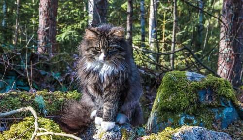 森の中にいる猫