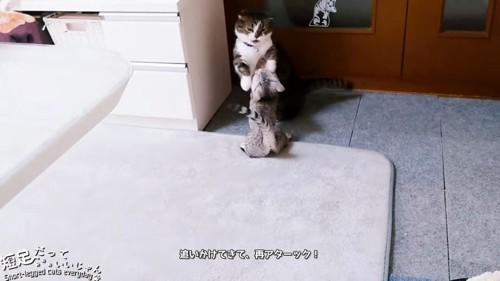 後ろ足で立ち上がる2匹の猫