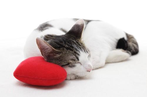 ハートのクッションと眠る猫