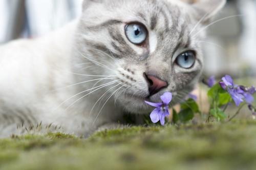 紫の花と猫