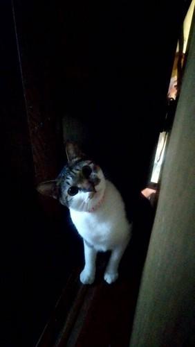 幽霊みたいな猫