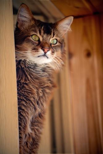 窓から外を見ているソマリ