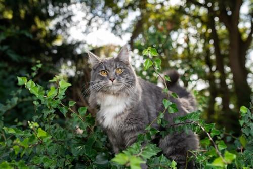 森の中に立つ猫