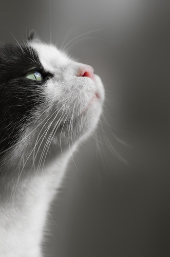においを嗅いでいる猫