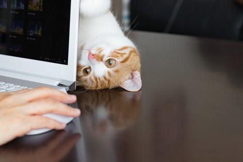 パソコンから覗く猫