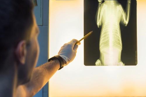獣医とレントゲン写真