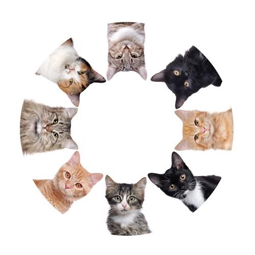 さまざまな種類の猫の輪