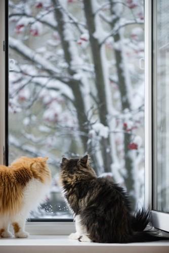 雪景色を見る二匹のペルシャの後ろ姿
