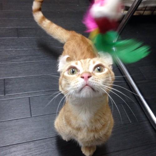 保護猫のキンカロー ニキちゃん