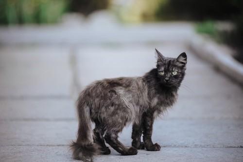 痩せている黒猫