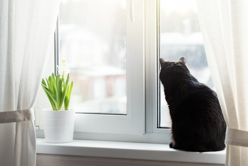 窓際から覗く猫