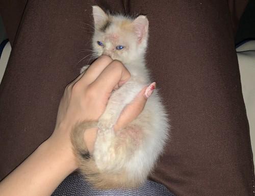 膝に乗って手を掴んでいる子猫