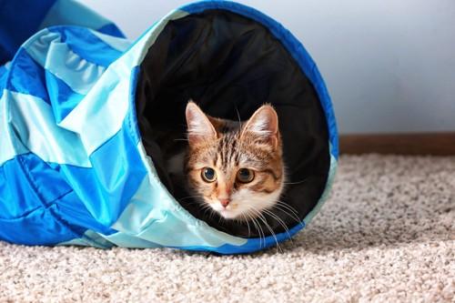 トンネルのおもちゃに入る猫