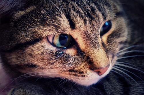 片目から涙が出ている猫のアップ
