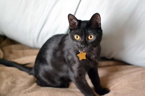 星型の首輪を付けている黒猫