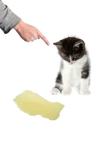 トイレを失敗して叱られる子猫