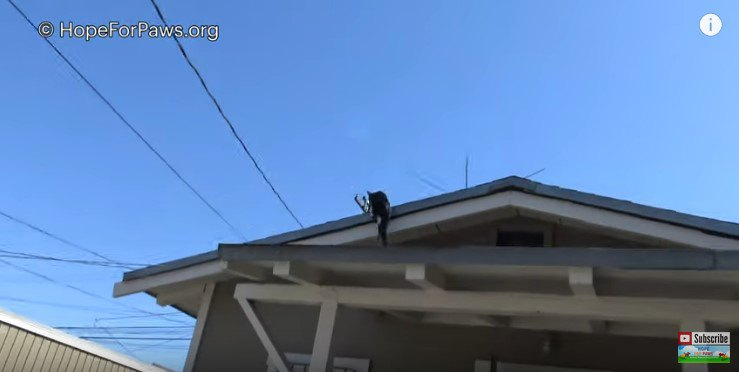 屋根に逃れる母猫