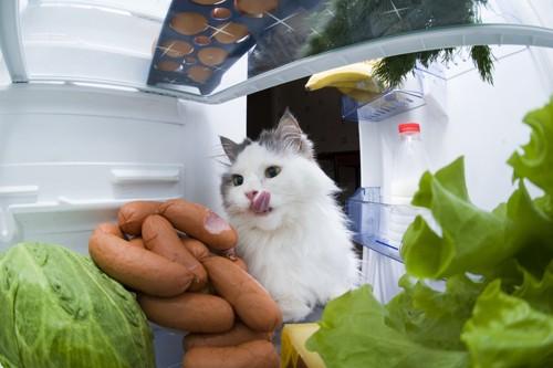 冷蔵庫をのぞく猫