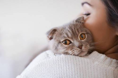 女性の肩越しにこちらを見る猫