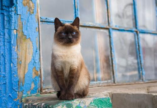 青い家とシャム猫