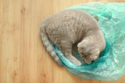 袋の上の猫