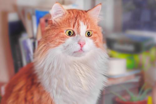 ショックを受けて茫然としている猫