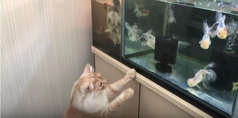 水槽に手をかけのぞく猫
