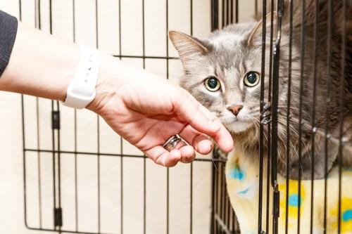 一段のケージから顔を出した猫を撫でる人の手