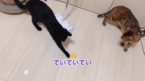 ボールで遊ぶ黒猫